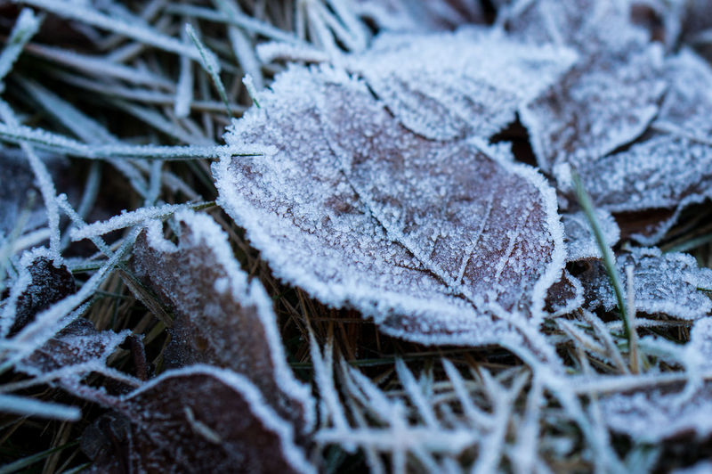 frost makes everything white Backgrounds Beauty In Nature Close-up Cold Cold Days Cold Temperature Day Fragility Frost Frozen Ice Ice Crystal Leaf Leaf 🍂 Nature No People Outdoors Weather Weather White Winter