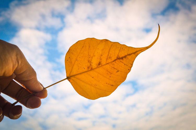 Eyeemphoto Enjoying Life Sky Leaf Bodhi Leaf Photo Nature Beautiful