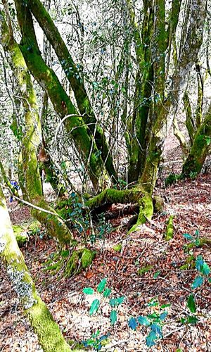 Adturias, España Tree Plant Forest Land Growth Day Tranquility Beauty In Nature Nature No People Beauty In Nature Forest Adventure Asturias Paraiso Natural🌿🌼🌊🌞 BellobellissimoNon-urban Scene WoodLand Trunk Tranquil Scene Tree Trunk Scenics - Nature Real People Outdoors Footpath Branch Remote Spain♥