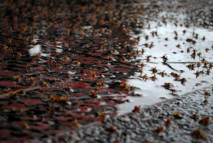 Autumn Fallen Leaf Floating On Water Fragility Leaf Leaves Reflection Water Waterfront