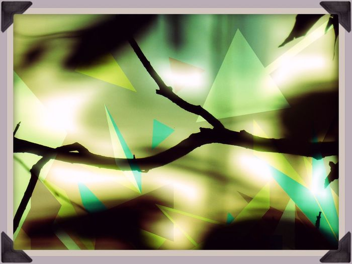 Abstract Abstract Art Abstract Branches Abstract Nature Abstract Photography Abstractart Beauty In Nature Blue Branch Branches And Leaves Branches And Shadow Focus On Foreground Glowing Green Color Illuminated Mid Century Art Mid Century Modern Multi Colored Nature Nature Photography No People Retro Colors Selective Focus Triangles Twig