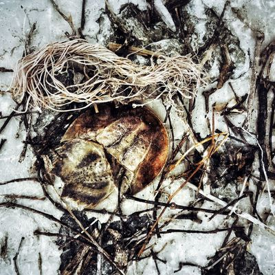horseshoe crab die within garbage. Horseshoe Crab Die Garbage Fine Art Photography Nature