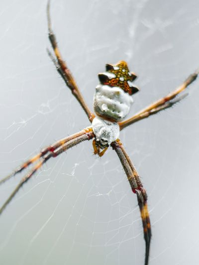 Week On Eyeem WeekOnEyeEm The Week On Eyem Animal Leg Spider Web Spider Insect Close-up Arachnid Invertebrate Web Wild Animal Arthropod Symmetry Animals Hunting