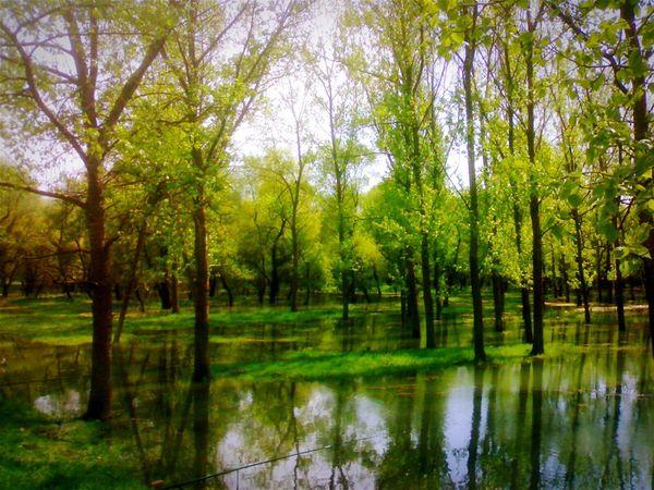 Nature Wood Trees Ukraine Enjoying Life