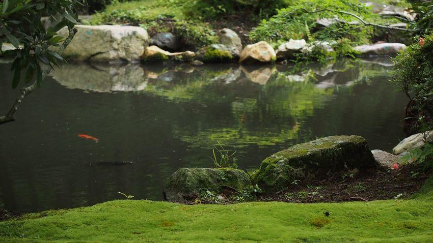 三千院… Beautiful Nature EyeEm Nature Lover EyeEm Best Shots Green Nature Japan,koyto Japanese Garden