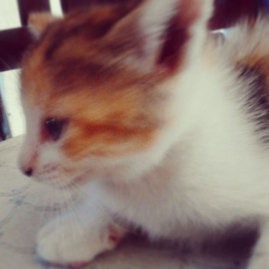 Oww Mybabycat  ñajajaIT 's beautiful followmeandfollowback :3 nyan:3