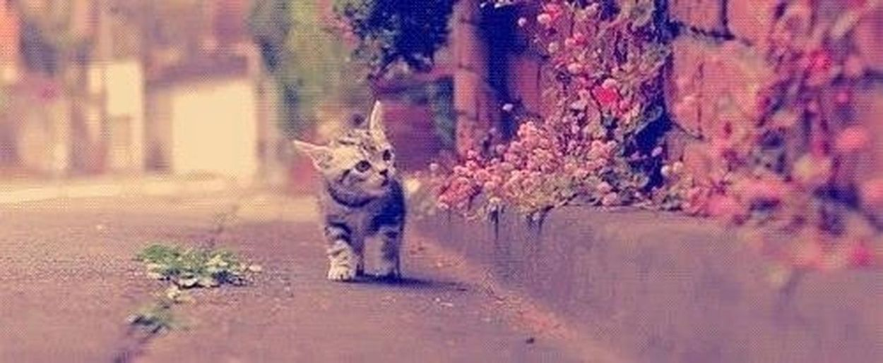 ❤ Cats Meow Hello World L'amour