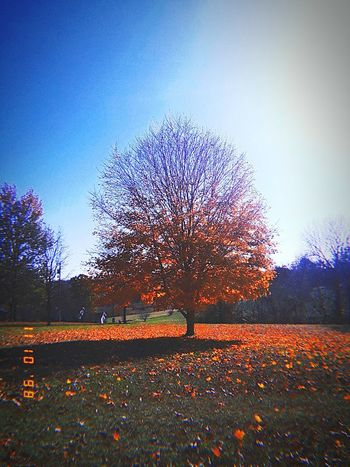 trees day 5 Trees And Sky Red Leaves🍂 Leaves 🍁 💋💋💋❤️❤️❤️ Beautiful Sky❤ 😘😍❤💕👀 Dying Leaves Fall Colors Fall Leaves Fall ❤❤❤❤❤❤❤❤❤❤❤❤❤❤❤❤❤ Dead Tree Pixelated Multi Colored Sky Beauty In Nature Calm