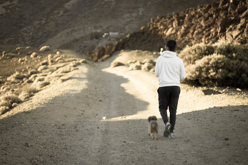 🚶♂️🐕 Yorkshire Terrier 50mm Canon 1100D Teide National Park Sand Dog Back Rear View Shadow Human Back Sunlight Walking Arid Climate Desert Arid Landscape
