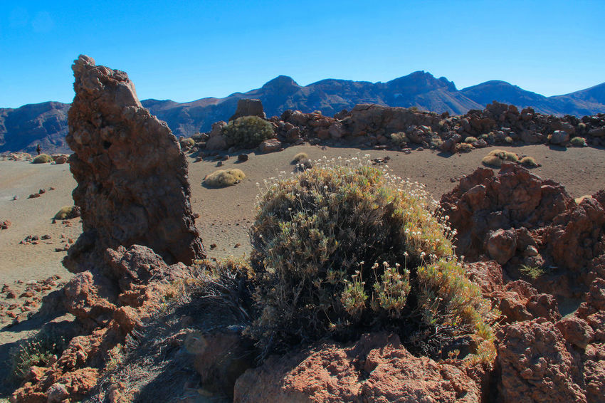 Arid Climate Beauty In Nature Blue Canadas Del Teide Clear Sky Day Desert Geology Landscape Mountain Mountain Range Nature Non-urban Scene Outdoors Physical Geography Plant Rock - Object Rock Formation Scenics Sky Sunlight Tenerife Tranquil Scene Tranquility Tree