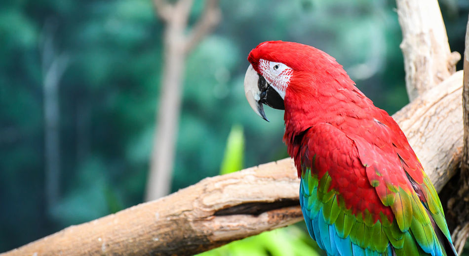 Close-up of macaw parrot perching on branch