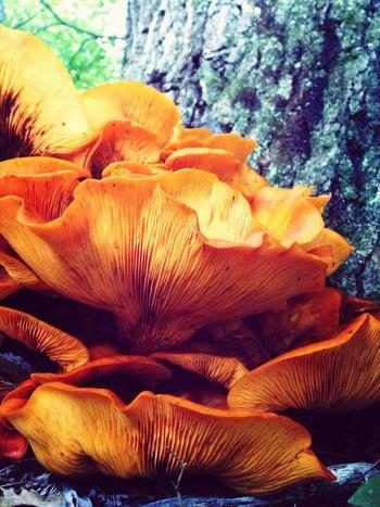 Mushrooms Eye Em Nature Lover