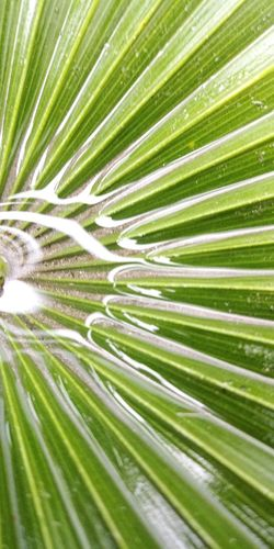 Reflection Creative Water Palm Frond Photography Tree Palm Tree Frond Backgrounds Leaf Full Frame Palm Leaf Close-up Green Color Plant Photosynthesis Natural Pattern Leaf Vein Plant Life Leaves Focus Fanned Out Delicate