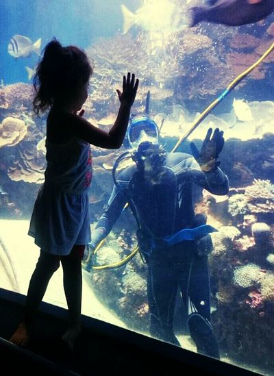Summer Child Girl Children Photography In The Water Diving Hello Window Observatorium Underwater Diver Live For The Story
