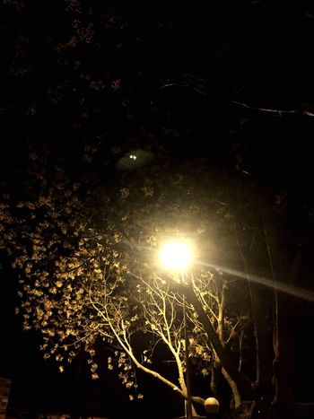 Nature Low Angle View Illuminated Night Beauty In Nature No People Growth Tranquility Tree Outdoors Sky Close-up Freshness