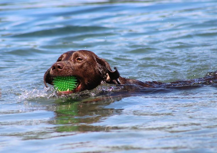 Close-up of a dog in the water