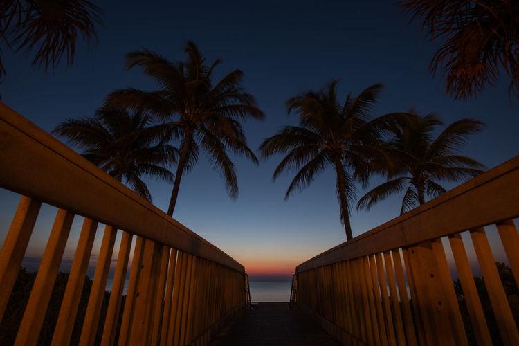 Footbridge and palm trees at dusk