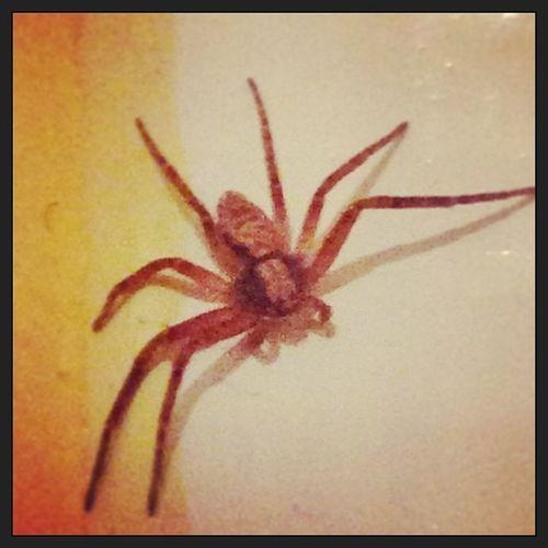 Pet in my flat :|