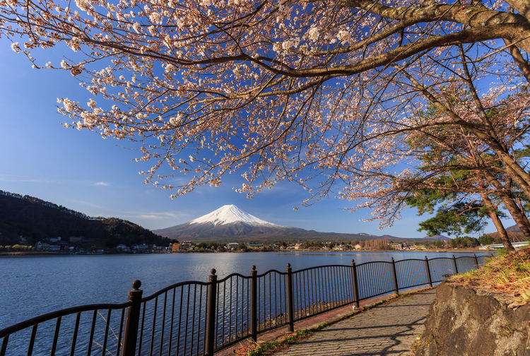 The sacred mountain - Mt. Fuji at Japan, spring Adventure Beauty In Nature Blue Sky Cherry Tree Flower Kawaguchi Lake Lake Landscape Landscape_Collection Morning, Rise Mountain Mt. Fuji, Japan Nature No People Outdoors Pink Color Sakura Sakura Blossom Sky Spring Springtime First Eyeem Photo