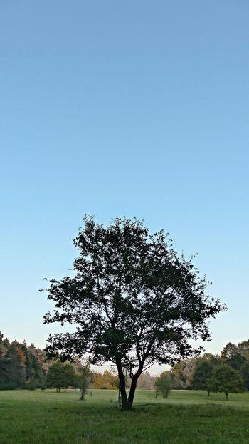 TreePorn Nature EyeEm Best Shots Nature_collection