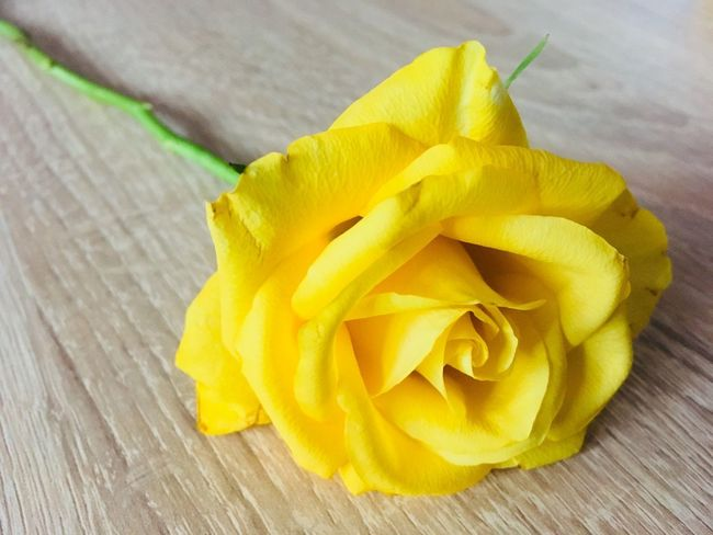Yellow roses Rosé Yellow Wood - Material Freshness Indoors  No People Close-up Food Day