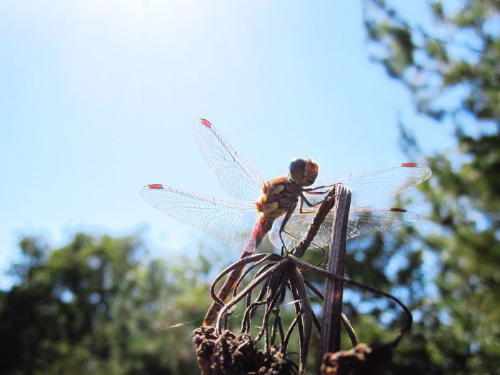 Nature Photography Nature_collection Nature On Your Doorstep Nature Natures Diversities Nature's Diversities Dragonflies Dragonfly