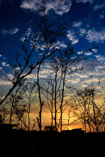Silhouette trees on field against sky at sunset