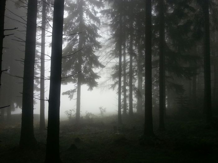 Fog Landscape_Collection Bw_collection Nature_collection