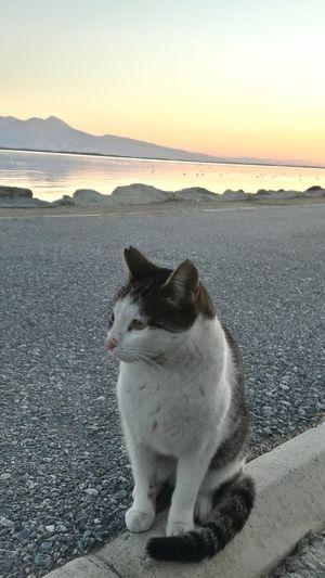 ızmir Cat Florya