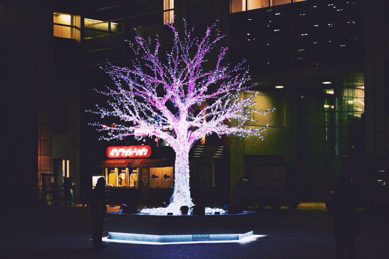 Low angle view of illuminated trees in the dark