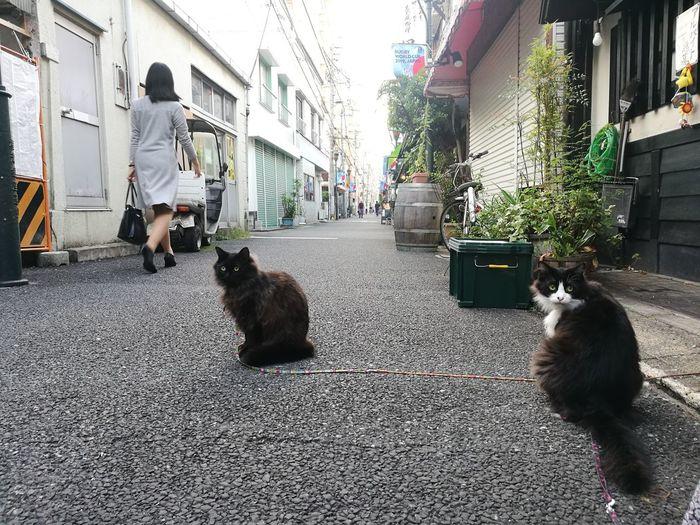 Cat City Pets