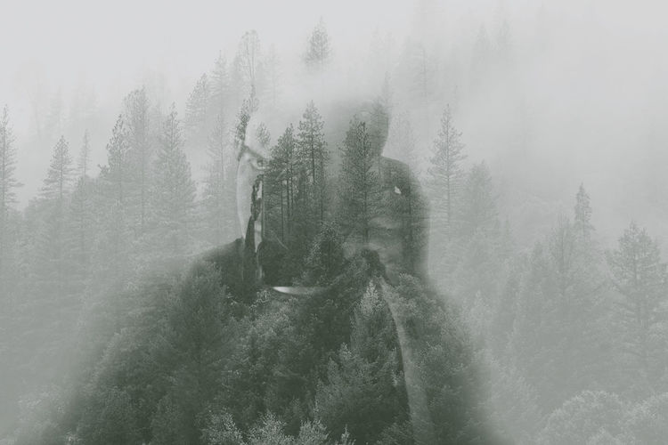 Panoramic shot of trees in forest during foggy weather