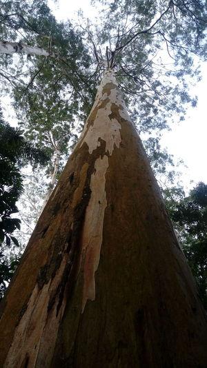 Arvore árvores Arvores... 🌿❤ Natureza Parquedoguarapiranga