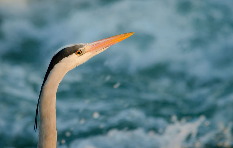 Close up of bird perching against sea
