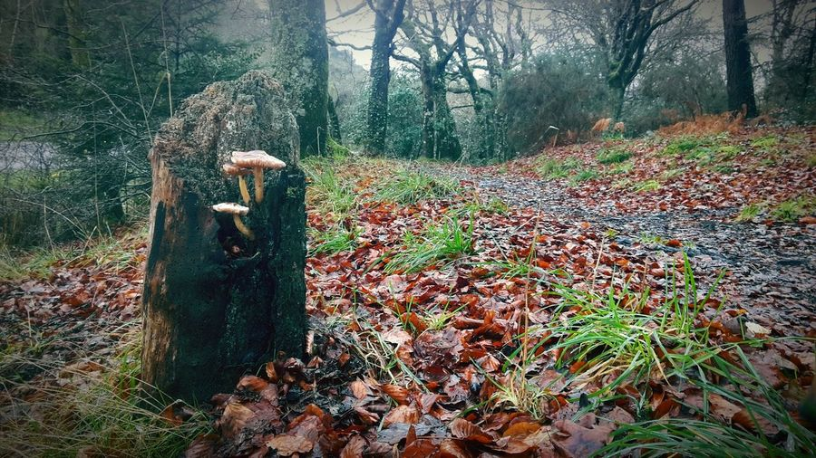 PhonePhotography Cycle Of Life Born To Be Wild Wildlife Wildlovers Mushroomphotography Wild Nature