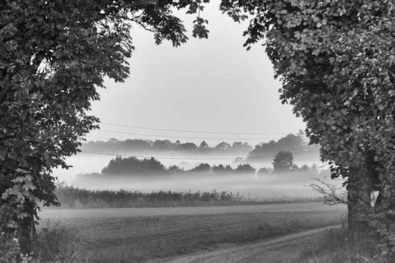 The fog is spreading out over the fields - Agriculture Beauty In Nature Black & White Black And White Blackandwhite Cultivated Land Exceptional Photographs EyeEm Best Shots - Black + White Field Fieldscape Monochrome Photography Foggy Foggy Landscape Foggy Morning Hello World Mist Misty Morning Nature Non-urban Scene Remote Rural Scene Scenics The Week Of Eyeem Tranquil Scene Tranquility