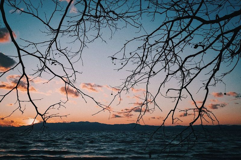 Sea Water Tranquil Scene Beauty In Nature Scenics Nature Tranquility Sunset Beach Silhouette Horizon Over Water Outdoors No People Tree Sky Sand Bare Tree Landscape Day