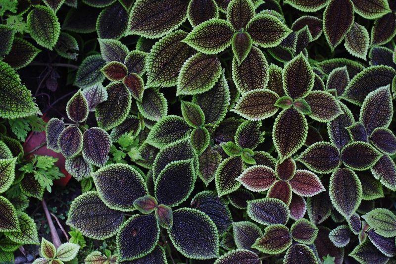 Secret Garden Green Botanical Gardens Plants Costa Rica Manzanillo Nature On Your Doorstep Nature's Diversities
