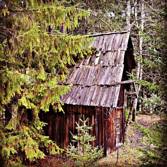 Shack Alpine Forest Slovenia Nikon