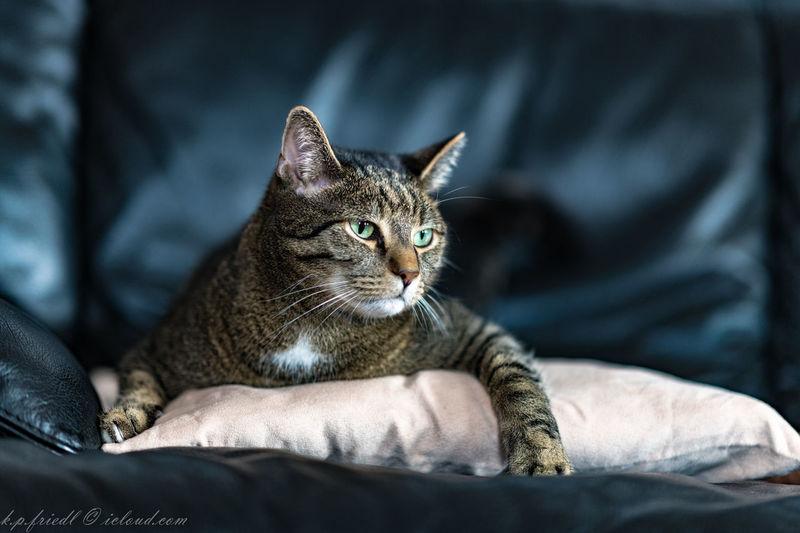 Cat In Residence Catlovers Joy Landlord Mayor Domus Meaning Of Life Residential Building Tabby Cat