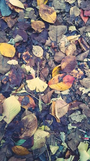 밟혀서 가루가 되고있는 바삭한 낙엽도 안녀엉~~~~
