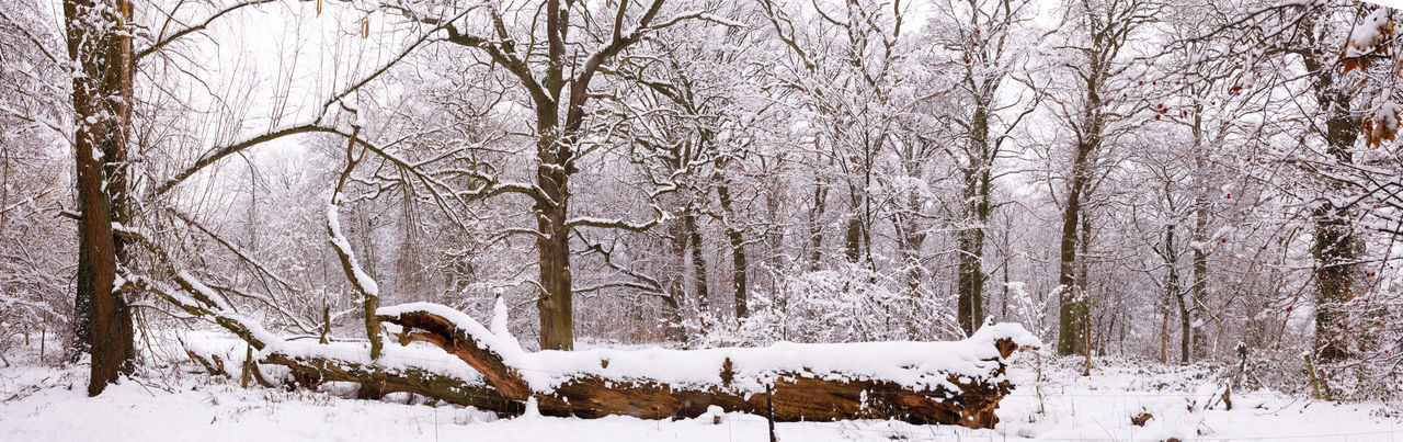 Snow Winter Cold Temperature Tree Plant No People Nature Day Land Beauty In Nature White Color Tree Trunk Bare Tree Branch Trunk Forest Covering Scenics - Nature Outdoors Snowing