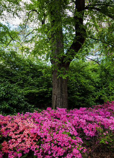 spring flowers and tree Tree Beauty In Nature Nature Tree Trunk Park - Man Made Space Flowerbed Spring Flowers And Tree Spring Foliage