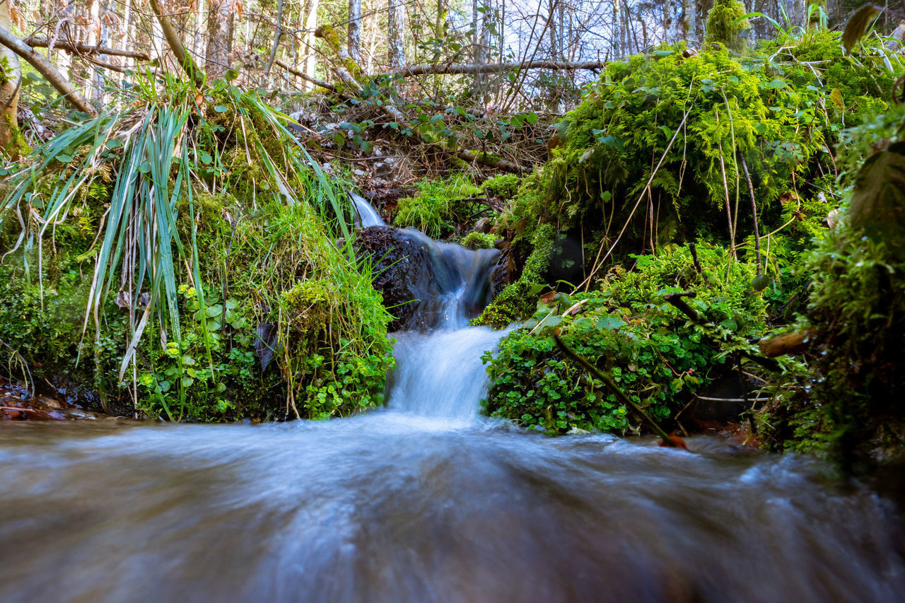 plant, water, flowing water, tree, motion, forest, long exposure, beauty in nature, scenics - nature, flowing, waterfall, land, nature, blurred motion, no people, solid, rock, waterfront, river, rainforest, outdoors, stream - flowing water, falling water, power in nature
