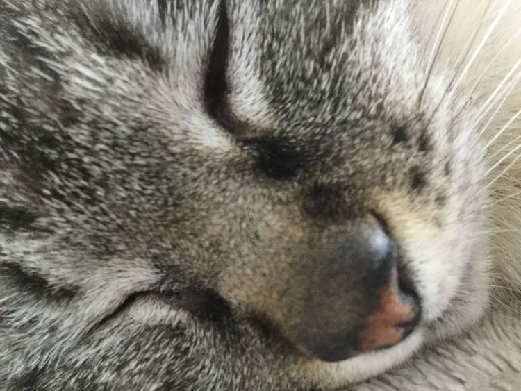 One Animal Animal Themes Eyes Closed  Pets Mammal Animal Body Part Sleeping Animal Head  Close-up No People Domestic Animals Animal Nose Whisker Animal Hair Animal Wildlife Dog Relaxation Portrait Animals In The Wild Outdoors Cat Chat
