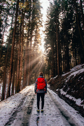 Rear view of man walking on footpath in forest during winter