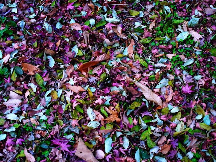 Leaf Autumn Change Full Frame Abundance Backgrounds No People High Angle View Nature Close-up Fallen Outdoors Leaves Multi Colored Day Beauty In Nature Fragility Freshness Millennial Pink