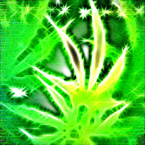 Ligalize It For Happy Summer Ligalize Cannabis Cannabis Editor Weed
