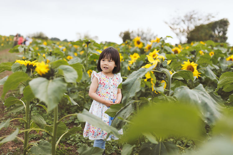 Girl standing amidst sunflowers