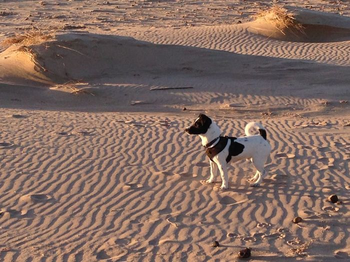 Beach Beachphotography Jack Russell Light And Shadow Outdoors Pattern Sand Shadow